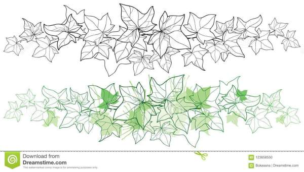 Hedera Cartoons Illustrations Vector Stock Images 192