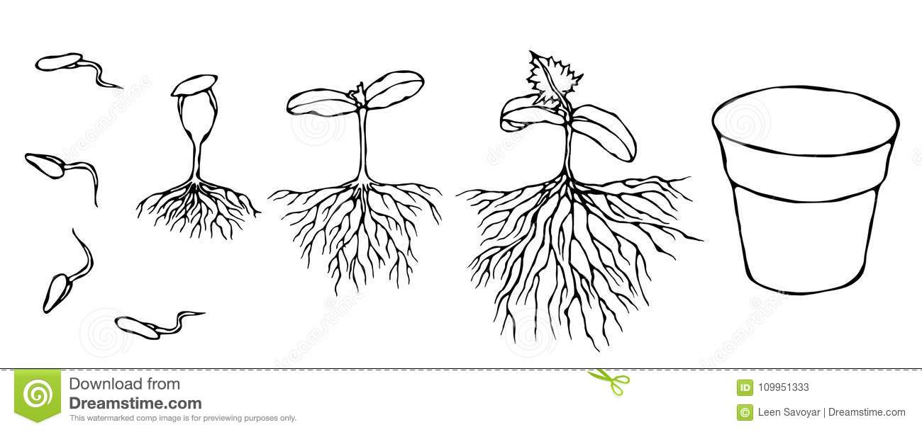 Sprout Cartoons, Illustrations & Vector Stock Images