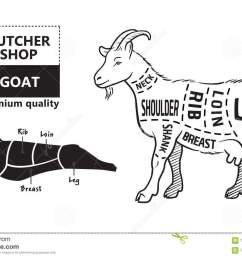vector illustration goat cuts diagram or chart goat black silhouette [ 1300 x 922 Pixel ]