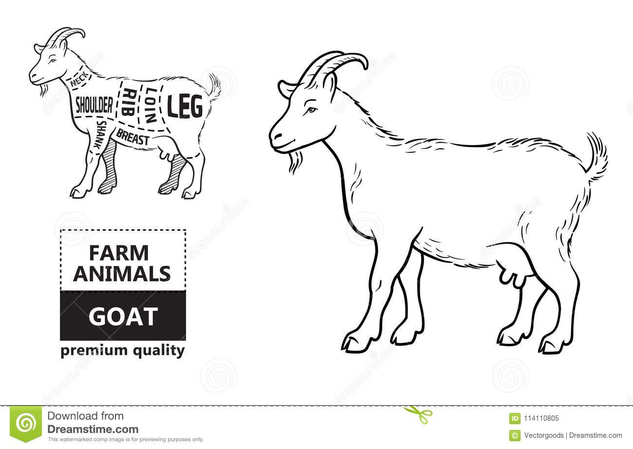 hight resolution of vector illustration goat cuts diagram or chart goat black silhouette