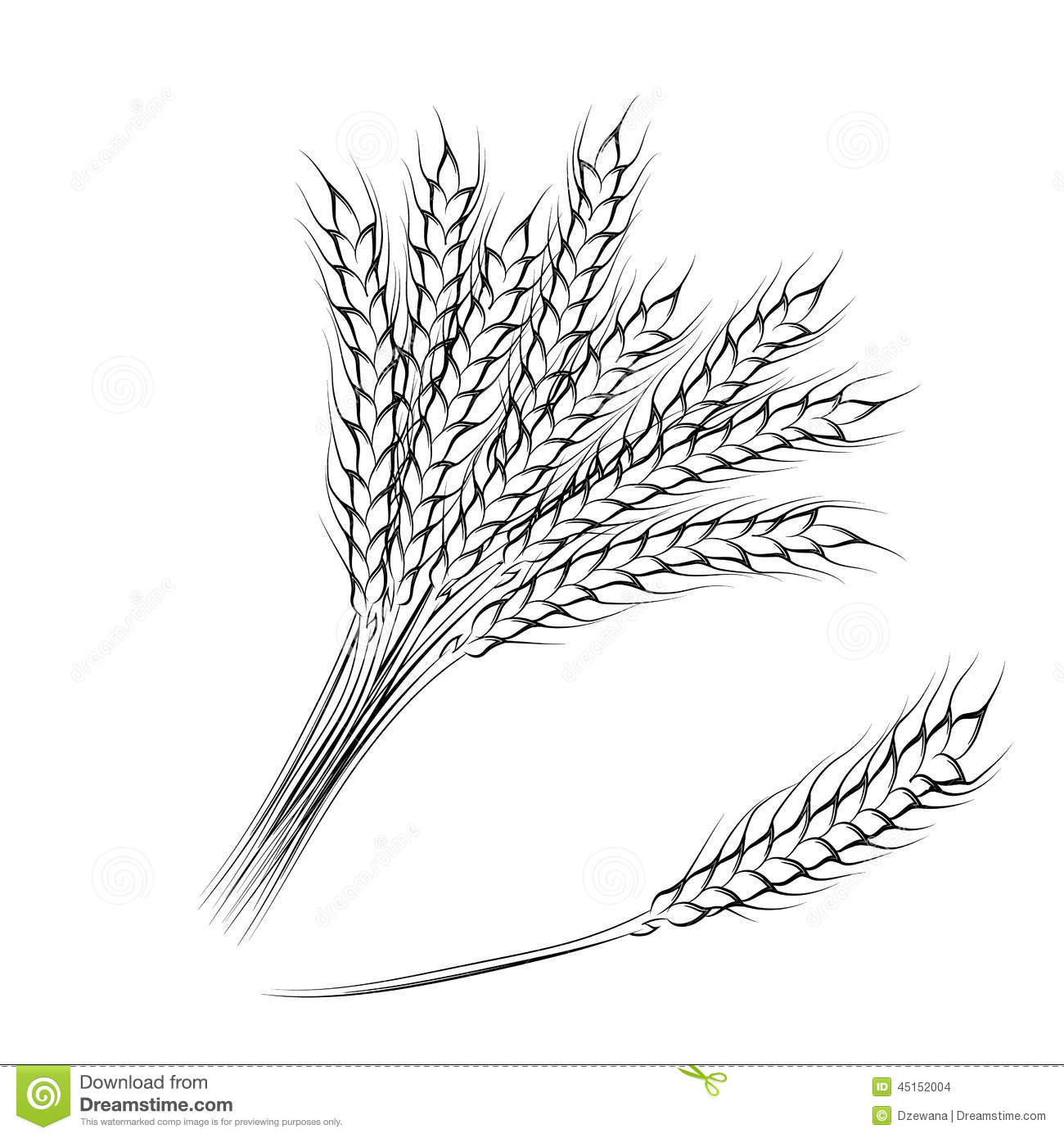 Vector Illustration Of Hand Drawing Wheat Ears Stock