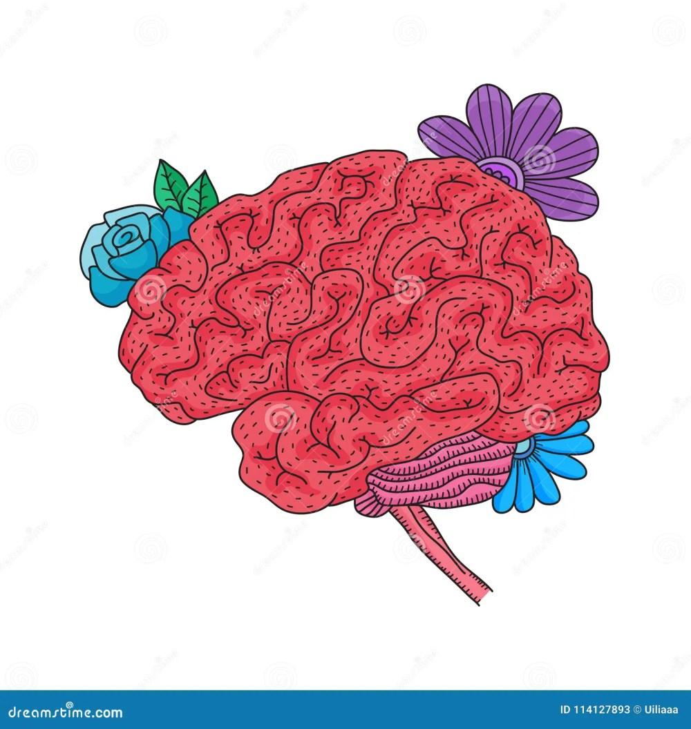 medium resolution of vector illustration of human brain isolated on white background flower throat diagram