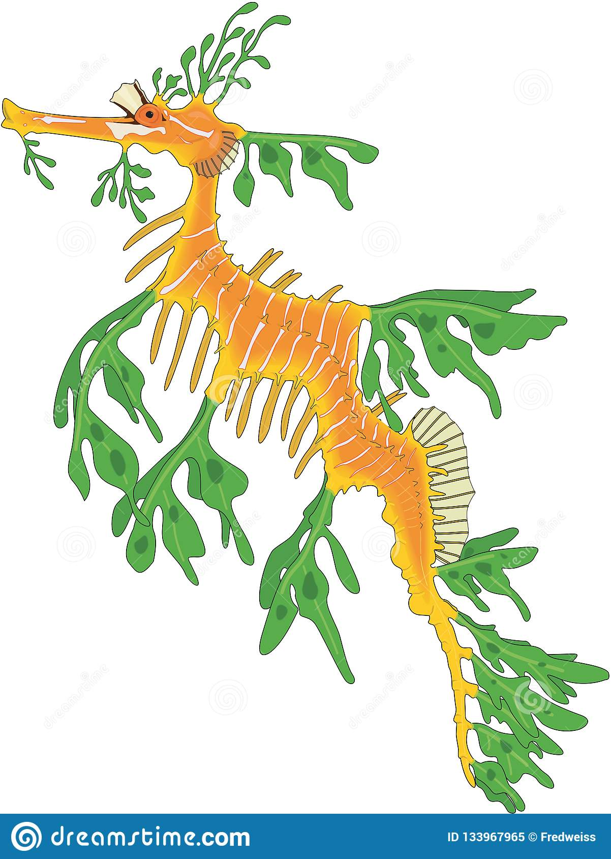 Sea Dragon Drawing : dragon, drawing, Leafy, Dragon, Stock, Illustrations, Illustrations,, Vectors, Clipart, Dreamstime