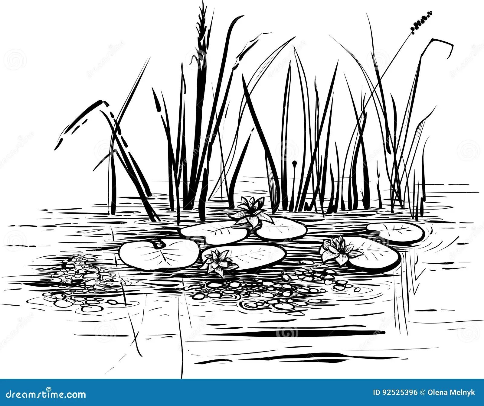 Vector Cartoon Illustration Of Reeds Vector Illustration