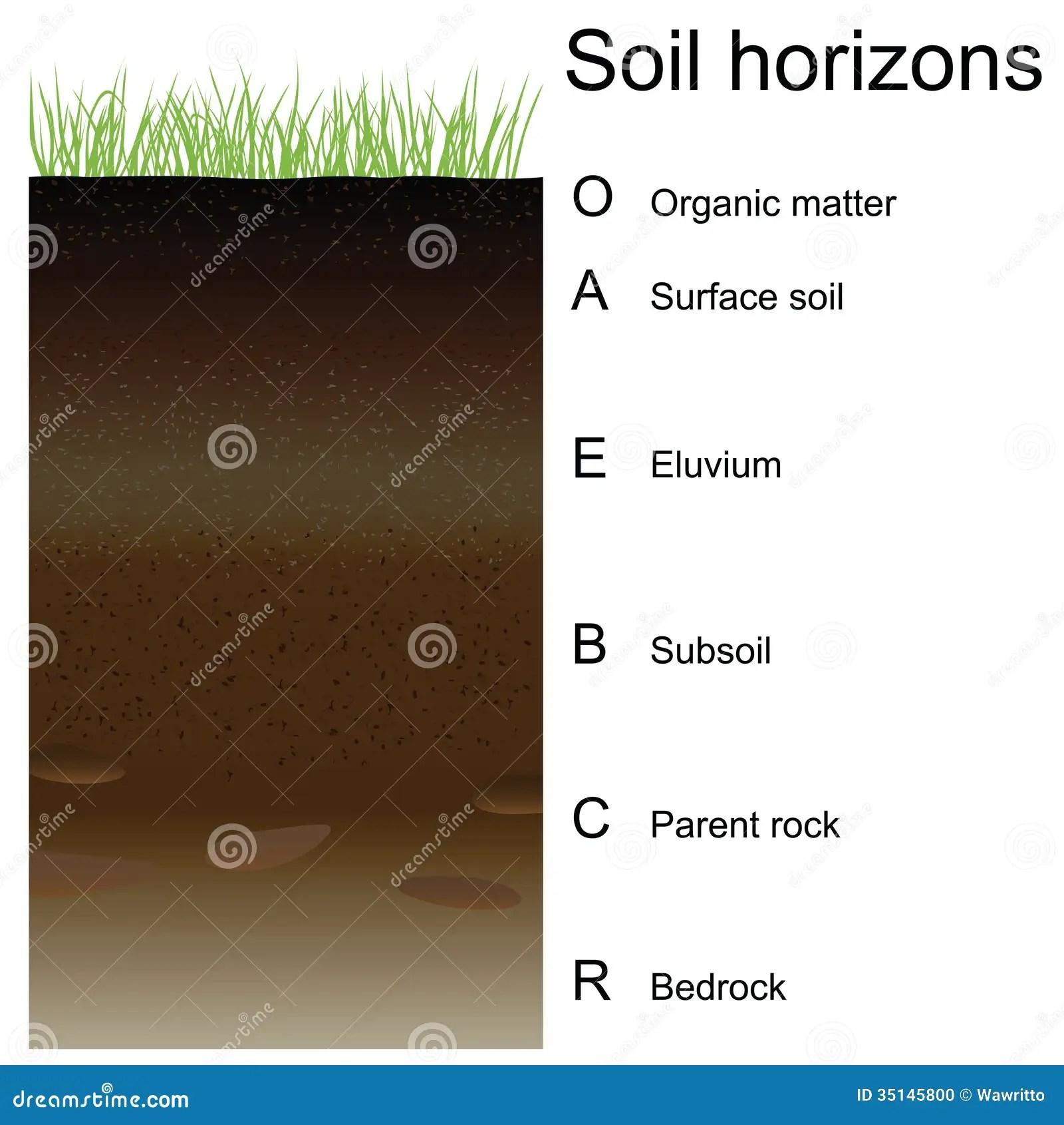 Vector Illustration Of Soil Horizons Layers Stock Vector