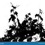 Vector Illustration Of Vine Leaves Branches Sarments Vine Shoots Tendrils Stock Vector Illustration Of Decoration Nature 187267619