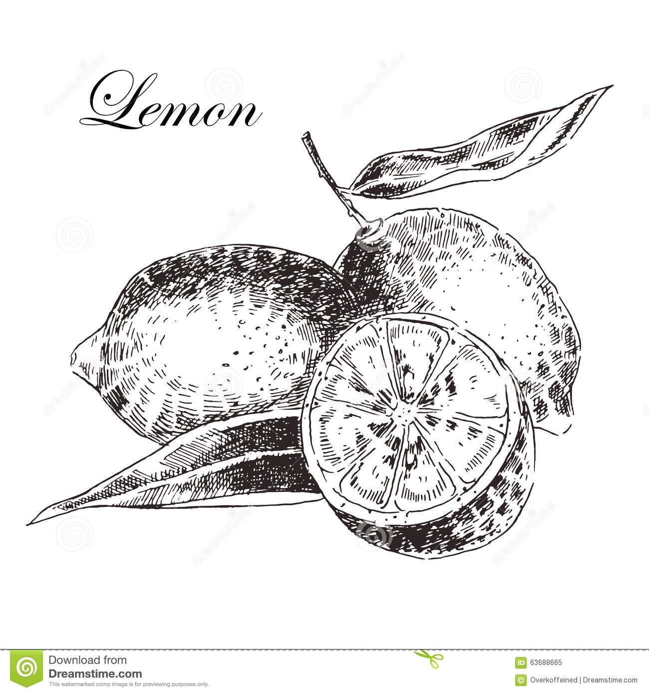 Vector Lemon Citrus Hand Drawn Sketch In Ink Stock Vector