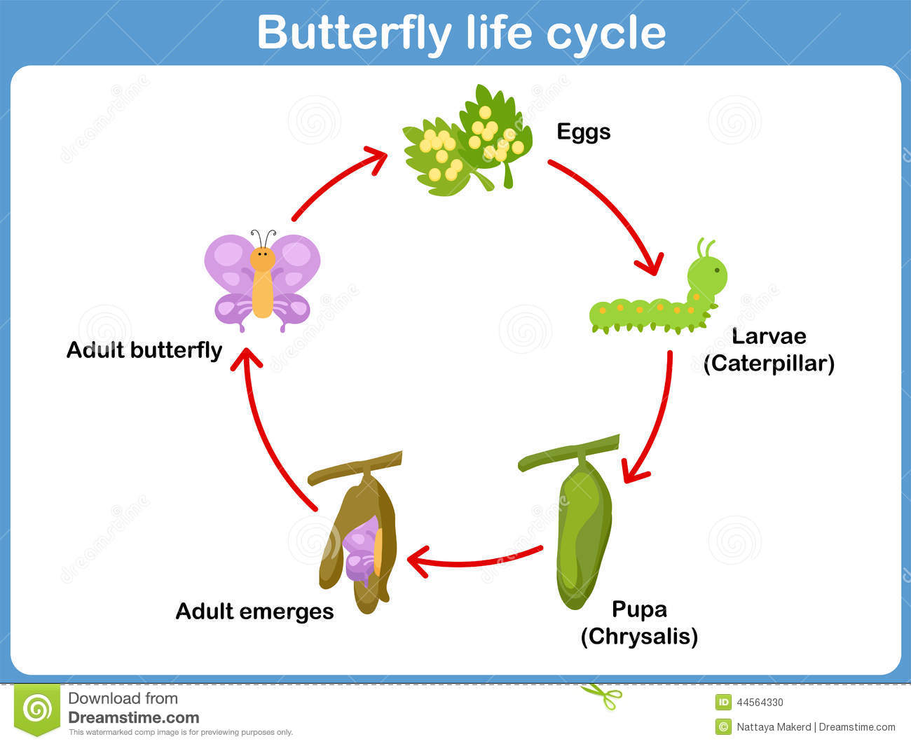 Vector Life Cycle Of A Butterfly For Kids Stock Vector