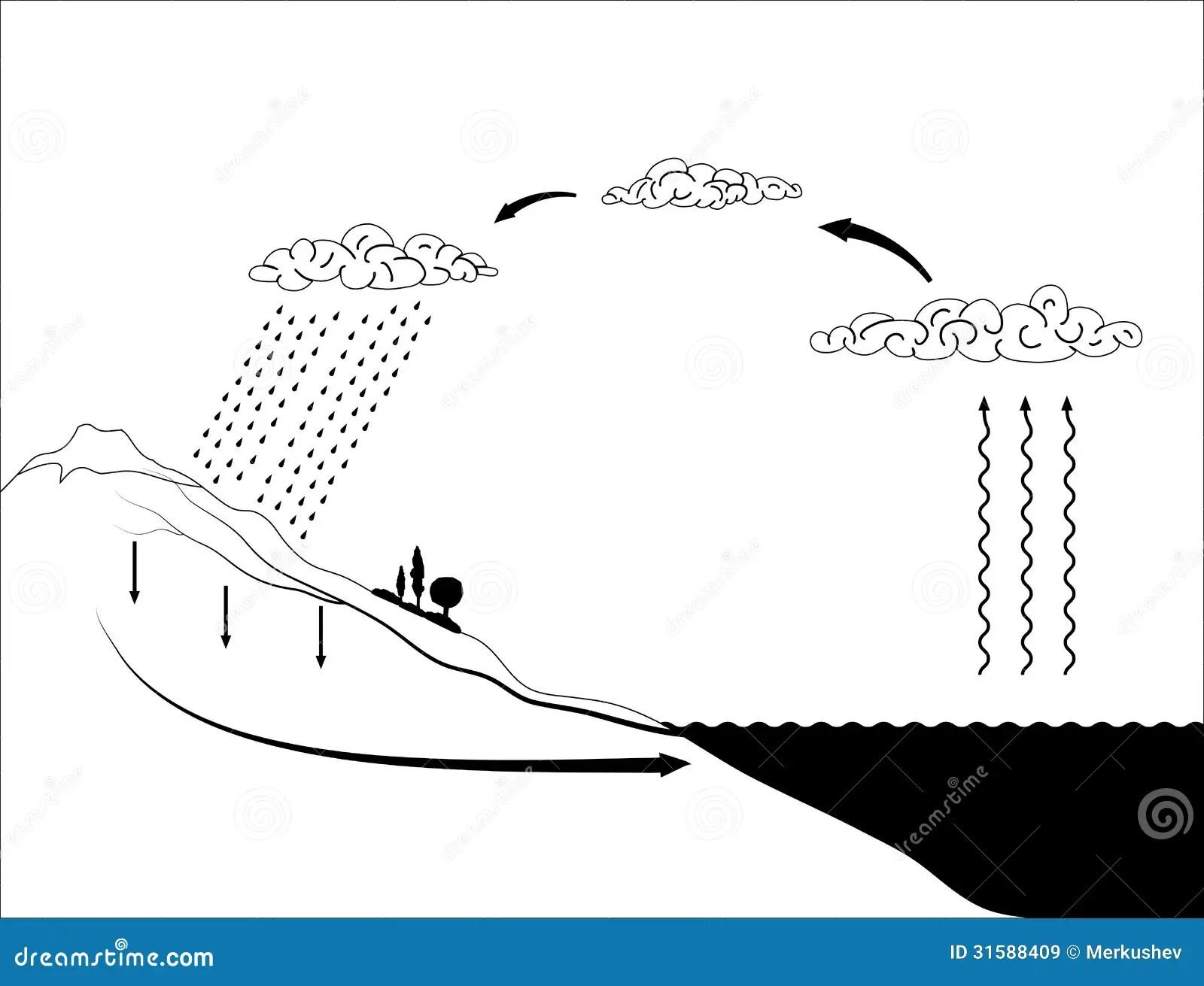 Vector Lo Schema Del Ciclo Dell'acqua In Natura