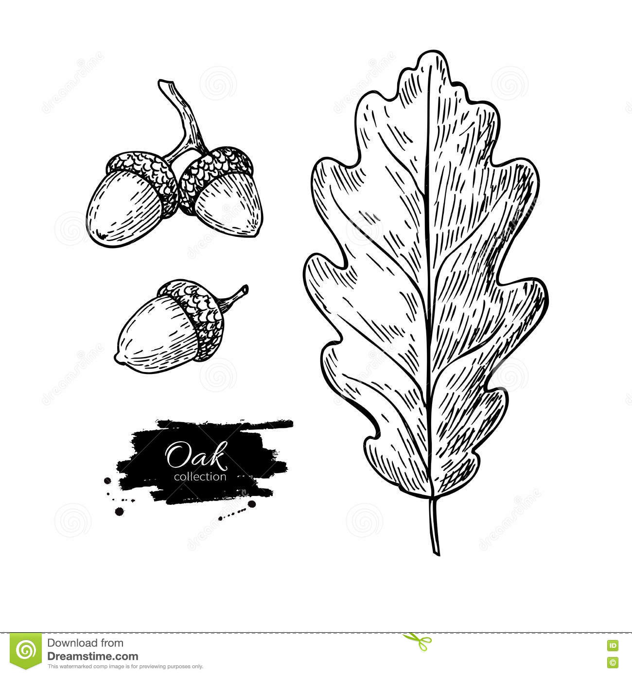 Vector Oak Leaf And Acorn Drawing Set Autumn Elements
