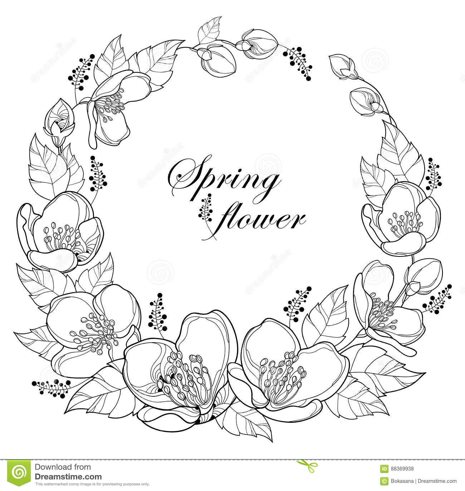 Vector Jasmine Flowers Vector Illustration