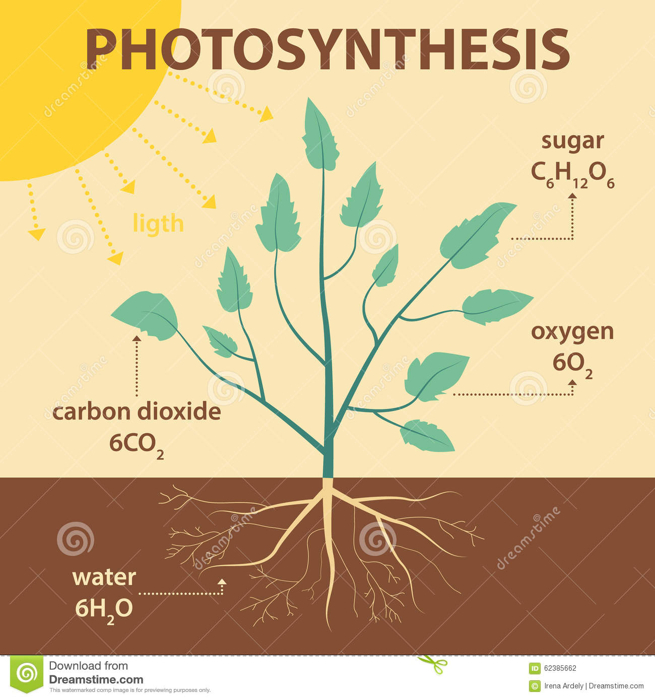 Vector Schematic Illustration Showing Photosynthesis Of