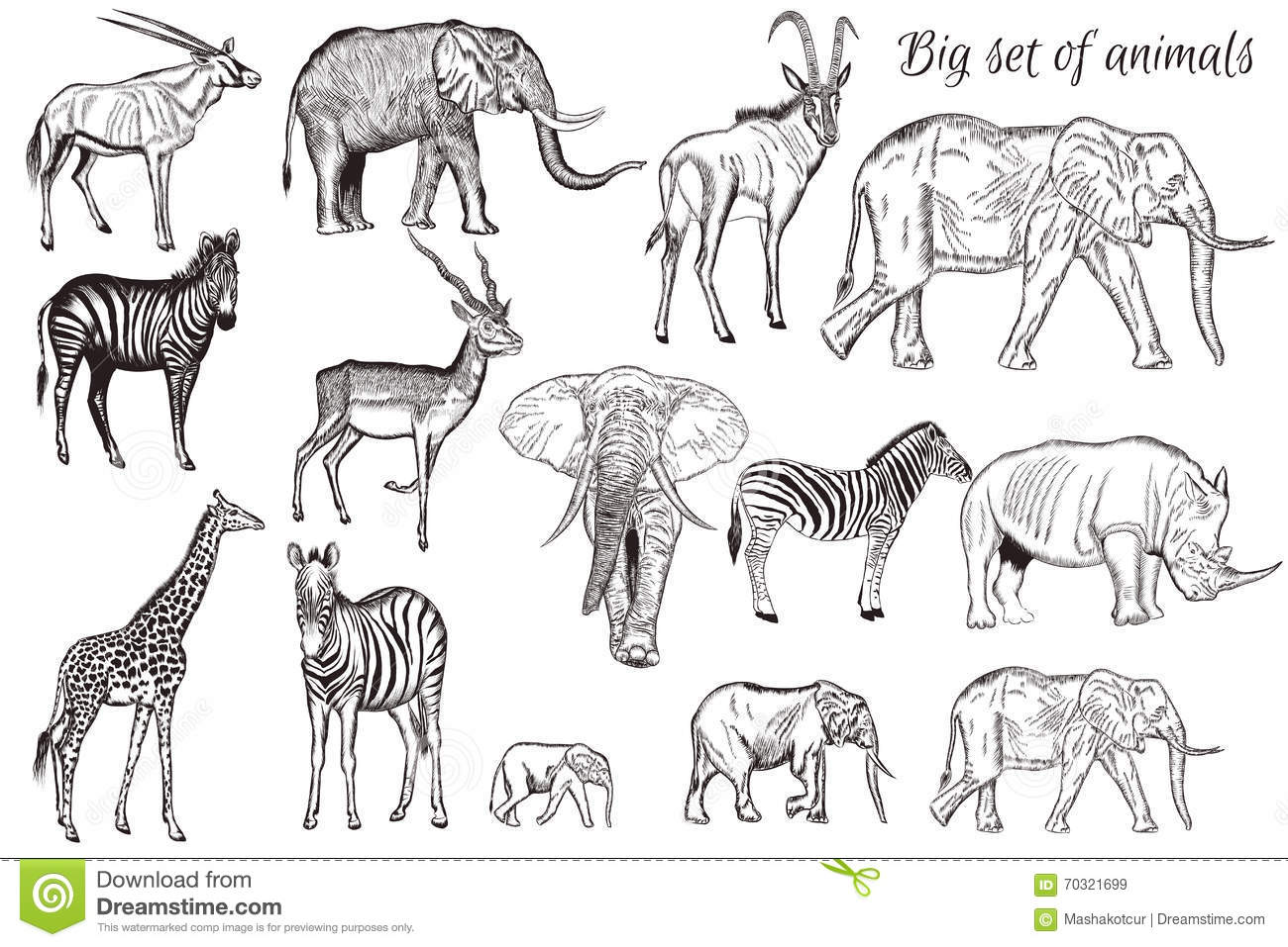 Vector Set Of Hand Drawn Detailed African Animal Stock