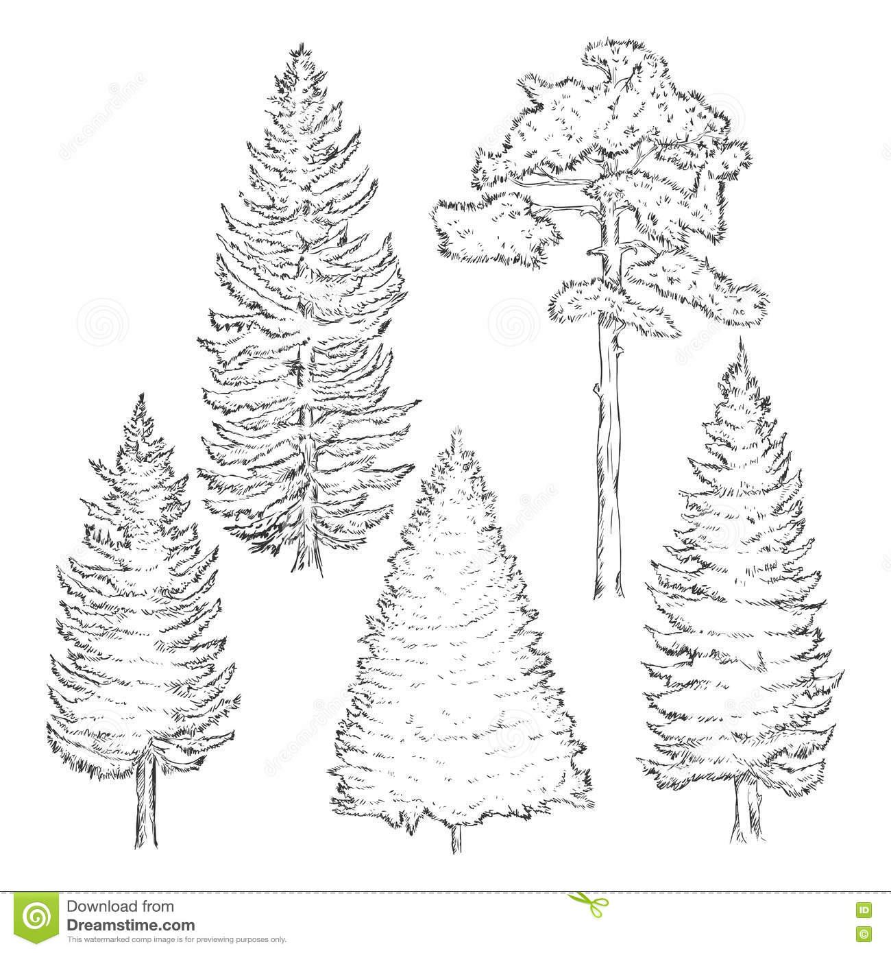 Vector Set Of Sketch Pine Trees Stock Illustration