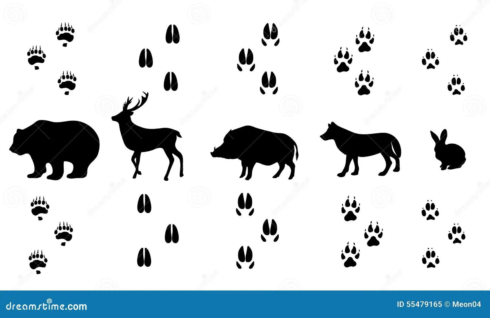 Vector Set Of Walking Wild Wood Animal Tracks Stock Vector