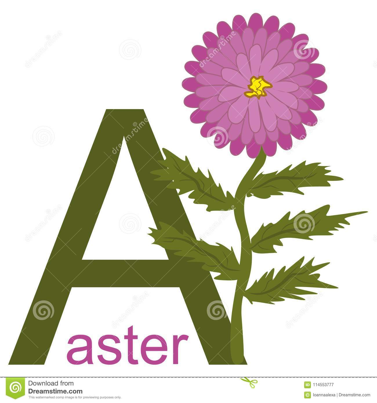 hight resolution of vector simple childish clipart with the beautiful aster flower