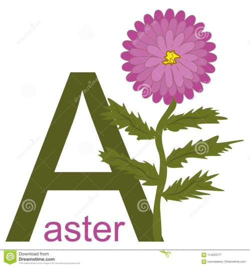 small resolution of vector simple childish clipart with the beautiful aster flower