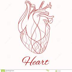 Vintage Red Real Heart Diagram 1967 Ford Fairlane Wiring Vector Sketch Of The Stock Image 55723525