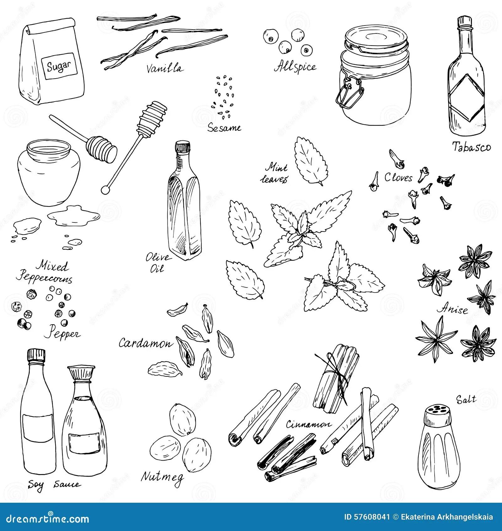 Vector spice set stock vector. Illustration of kitchen