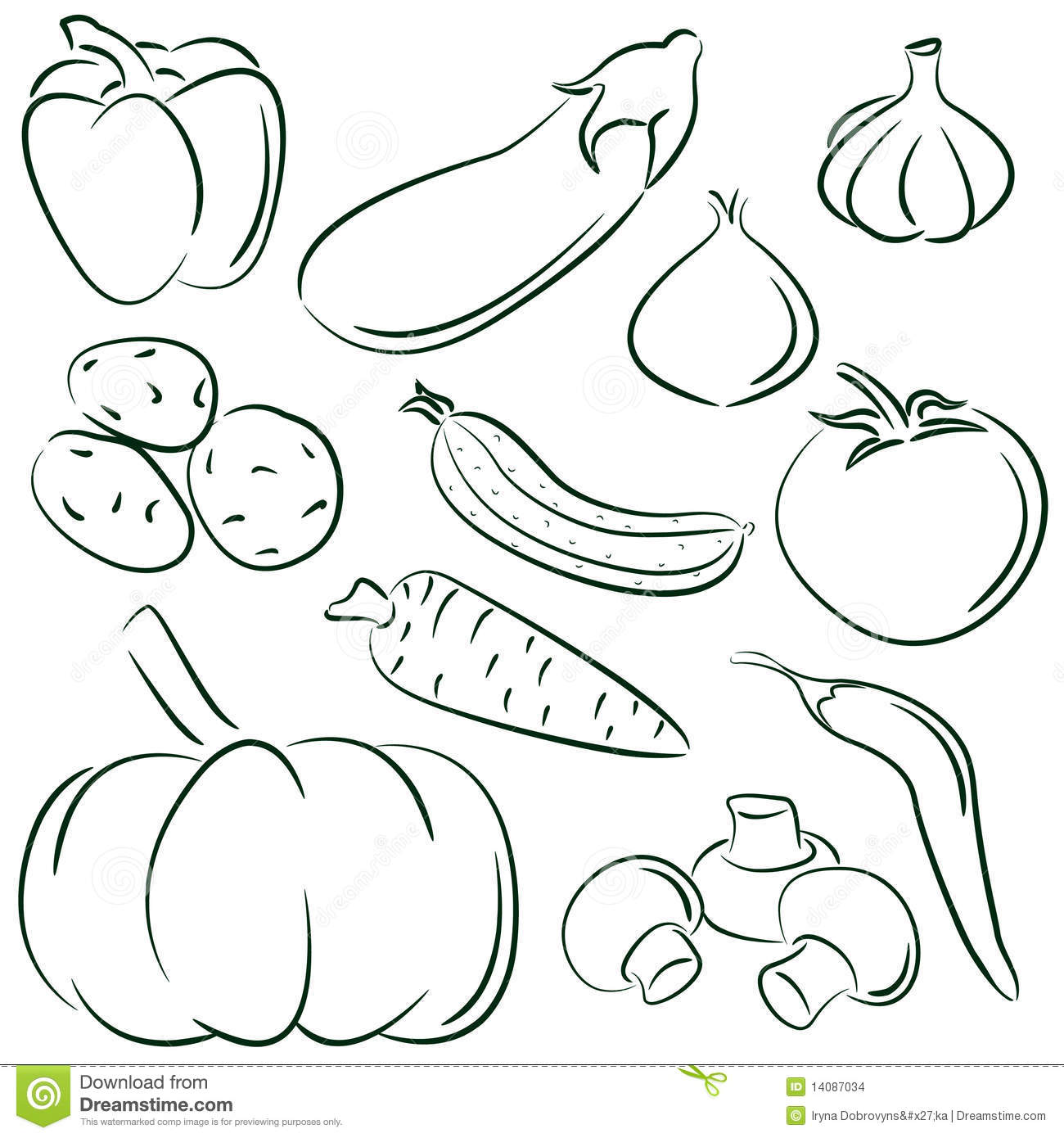 Vegetable Doodles Stock Vector Image Of Garlic Plant