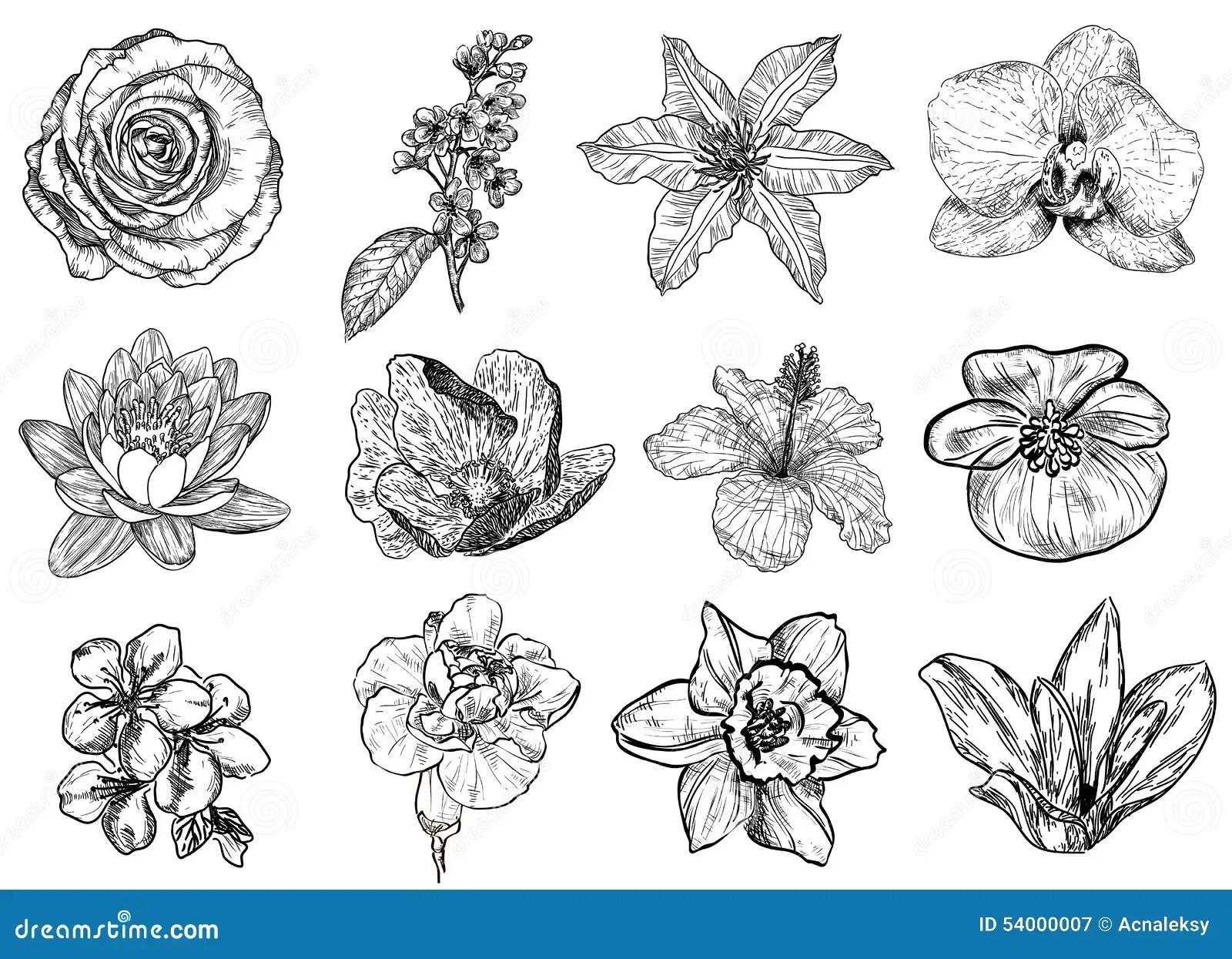 Vektorillustration Av Svartvita Blommor Vektor