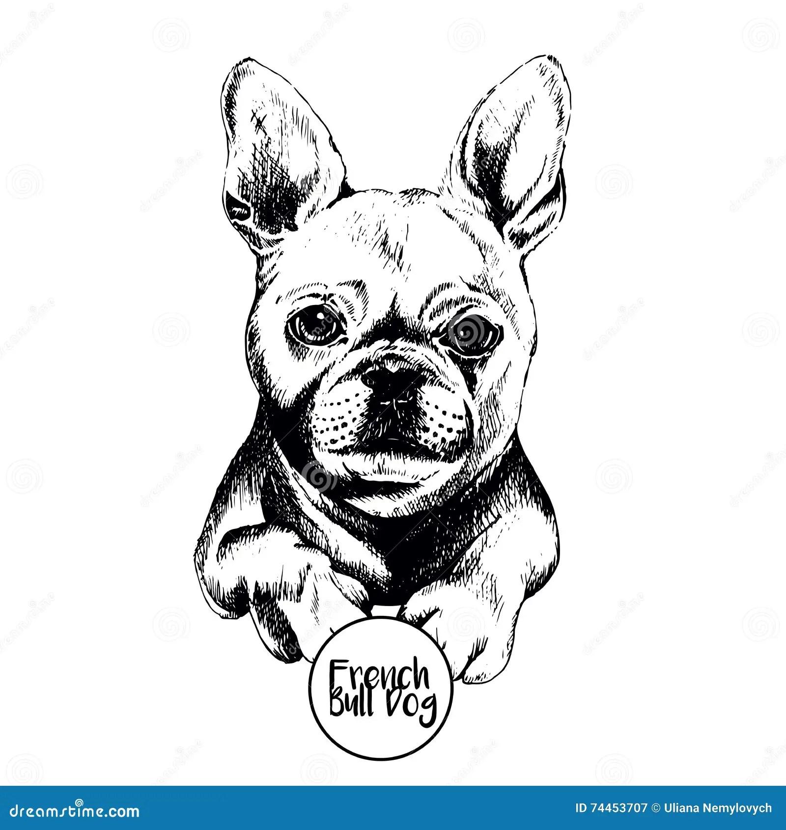 Vektorportrat Der Franzosischen Bulldogge Hand Gezeichnete