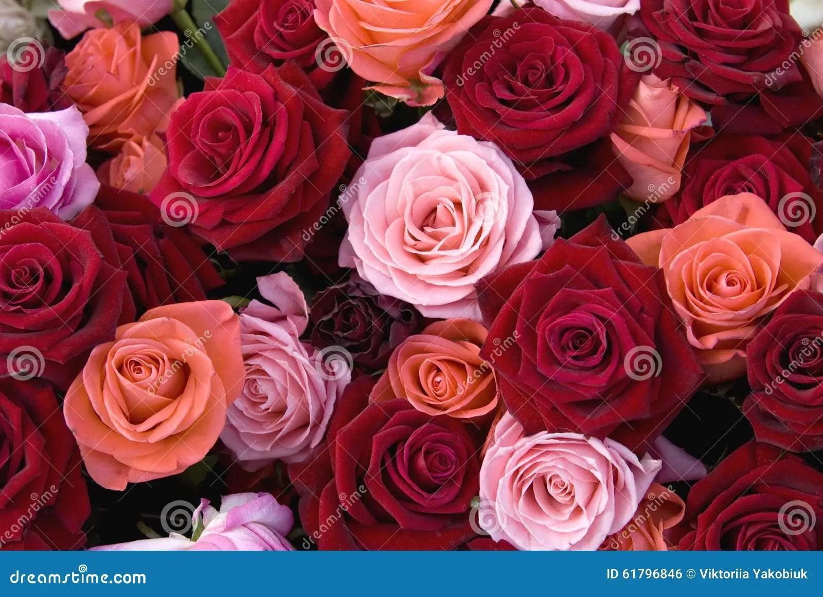 Verschiedene Farben Von Rosen Stockfoto  Bild 61796846