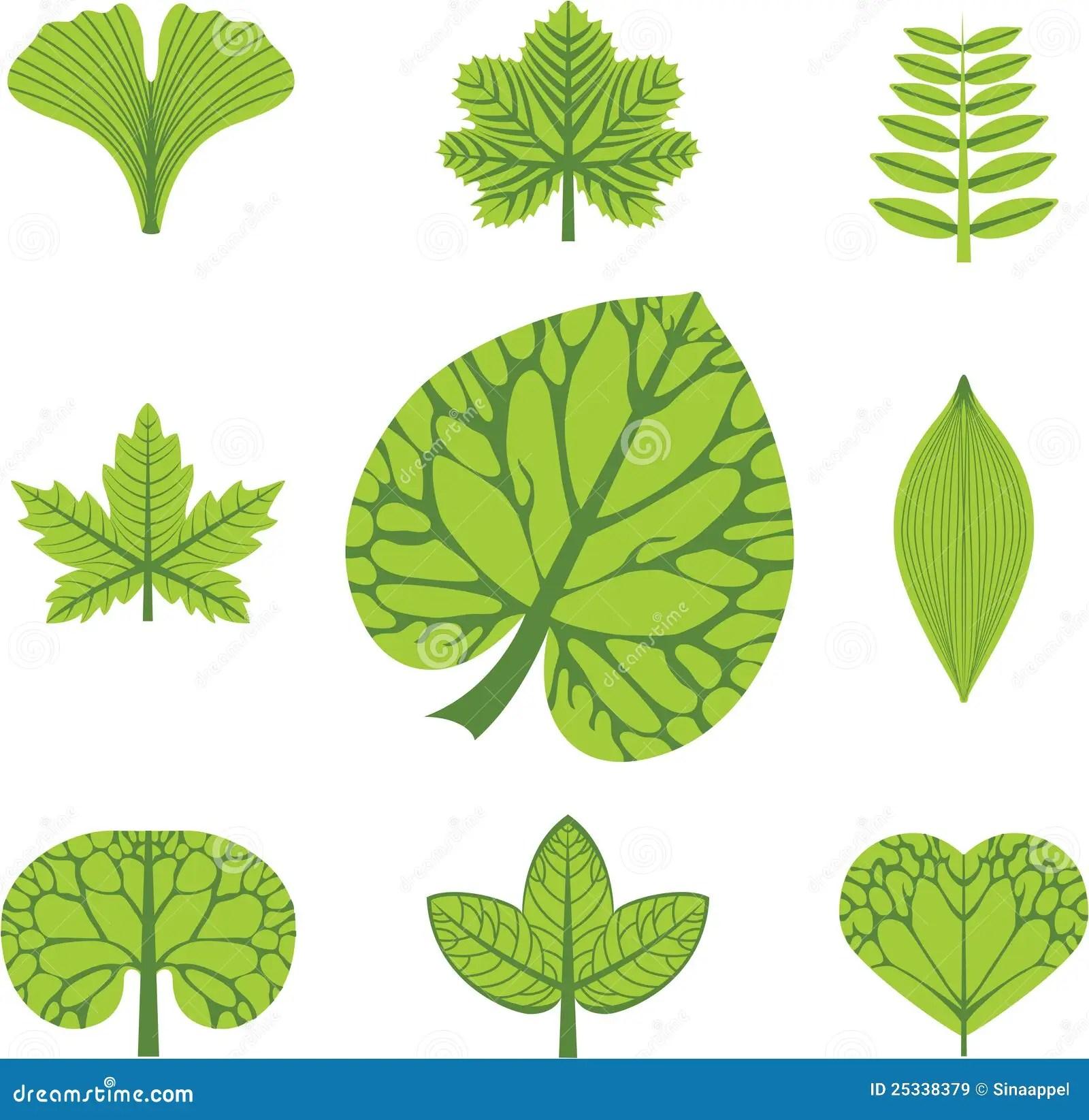 Verschillende Types Van Bladeren Vector Illustratie