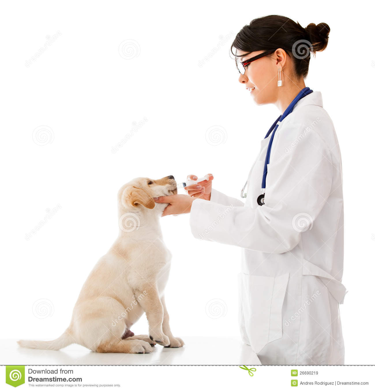 Vet Giving Medicine To A Puppy Stock Image  Image of