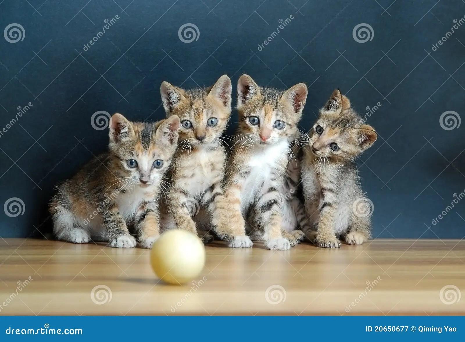 Vier leuke katten stock afbeelding Afbeelding bestaande