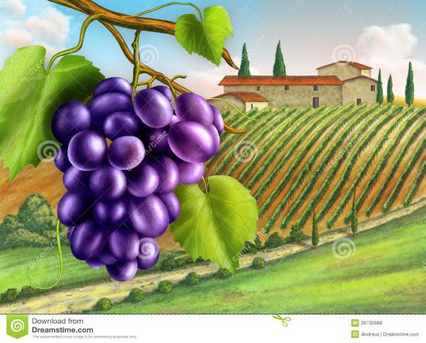 Vineyard Stock Illustration. Illustration Of Outdoor