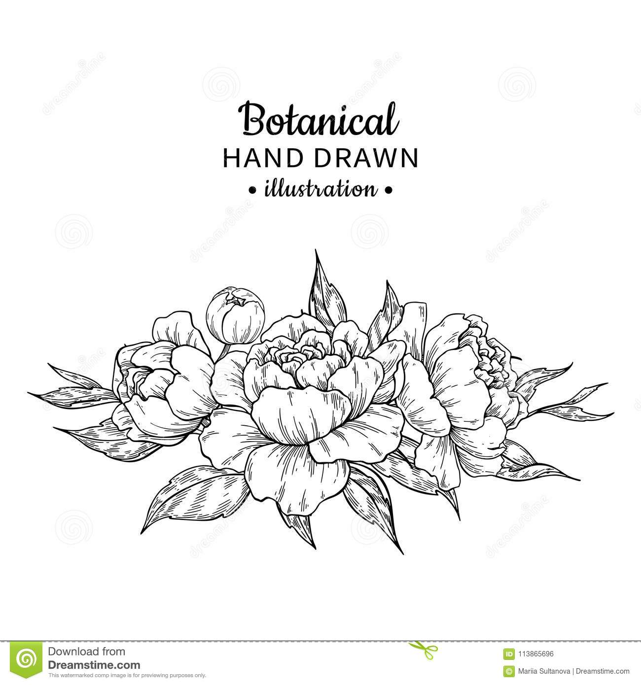 Vintage Flower Bouquet Vector Drawing Peony Rose