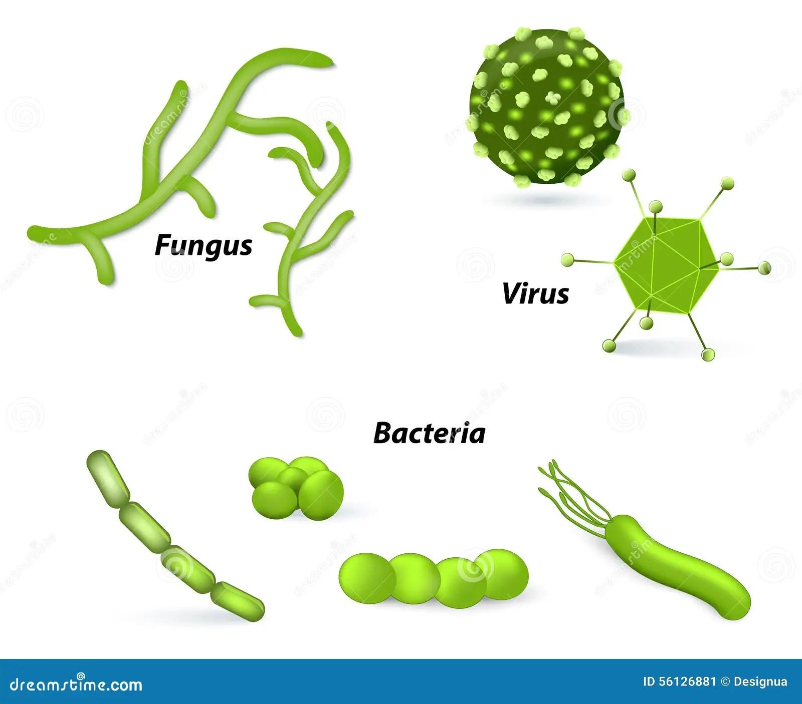 Virus Bacteria And Fungi Stock Vector Illustration Of