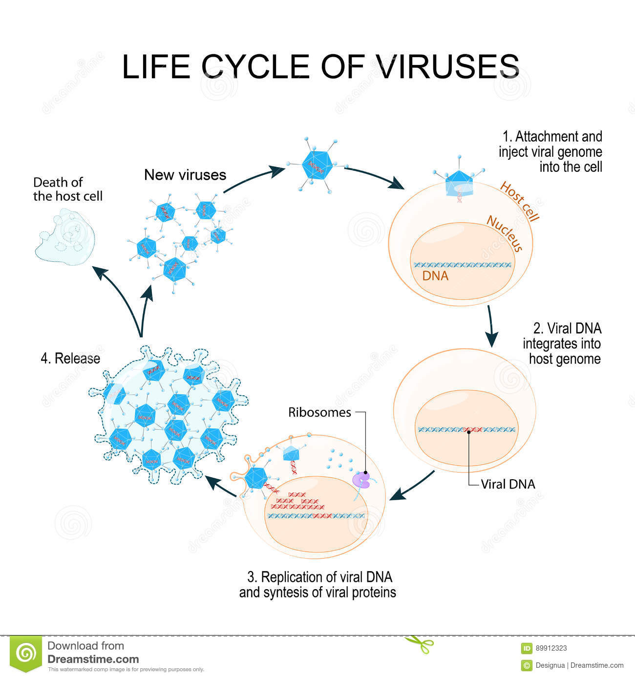 Virus Replication Cycle Stock Vector Illustration Of