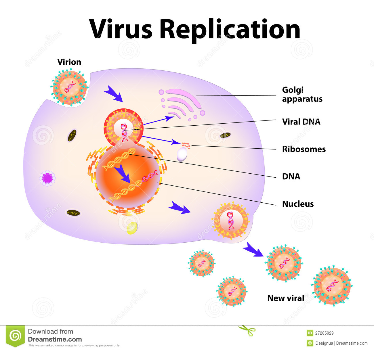 basic virus diagram 3 pin plug wiring australia simple hiv at 40x magnification