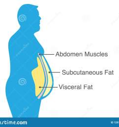 visceral fat and subcutaneous fat that accumulate around your waistline  [ 1600 x 1199 Pixel ]