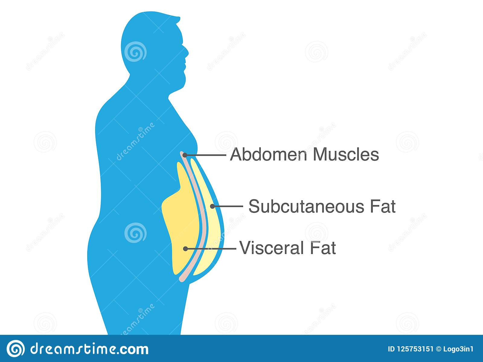 hight resolution of visceral fat and subcutaneous fat that accumulate around your waistline