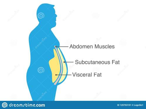 small resolution of visceral fat and subcutaneous fat that accumulate around your waistline