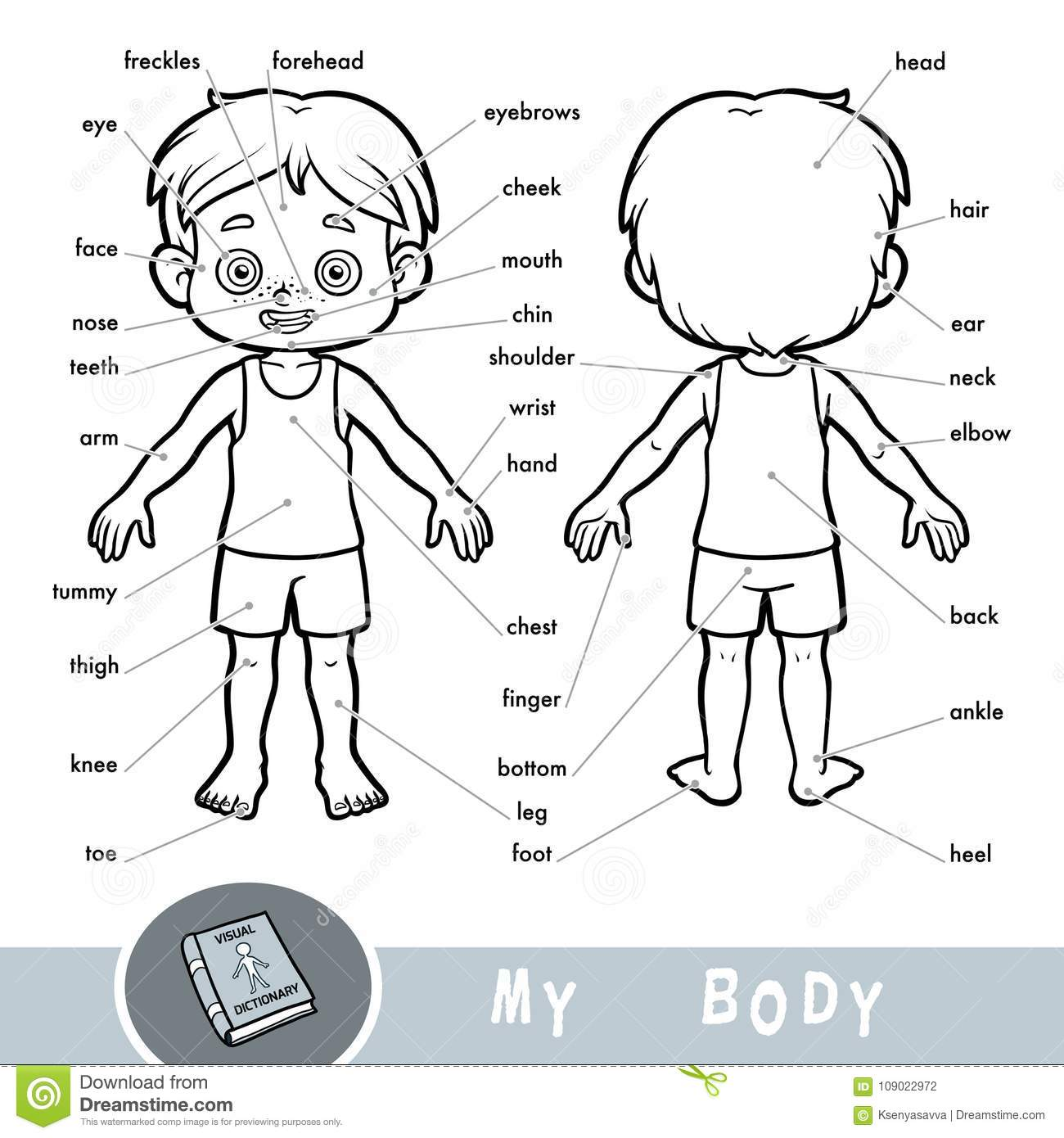 Visual Dictionary About The Human Body My Body Parts For