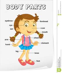 Spanish Worksheets Parts Of The Body parts of the body