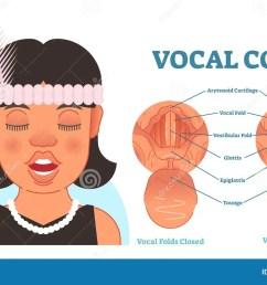 vocal cord anatomy vector illustration diagram educational medical scheme  [ 1300 x 815 Pixel ]