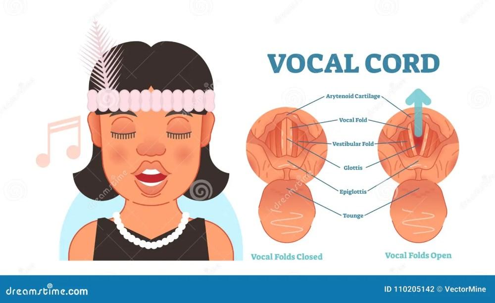 medium resolution of vocal cord anatomy vector illustration diagram educational medical scheme