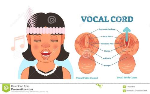 small resolution of vocal cord anatomy vector illustration diagram educational medical scheme