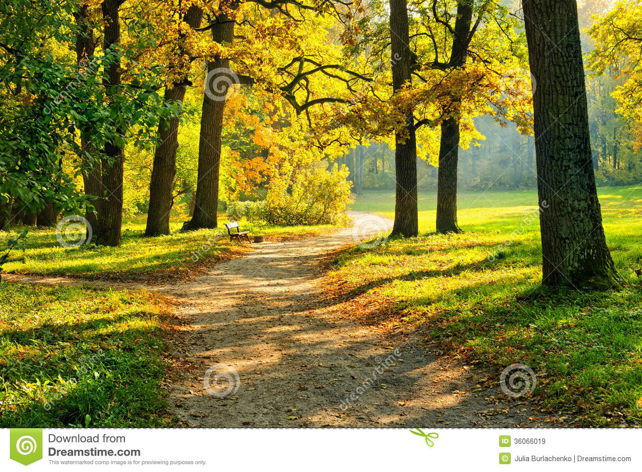 Fall Foliage Wallpaper Hd Warm Autumn Stock Image Image Of Pathway Forest