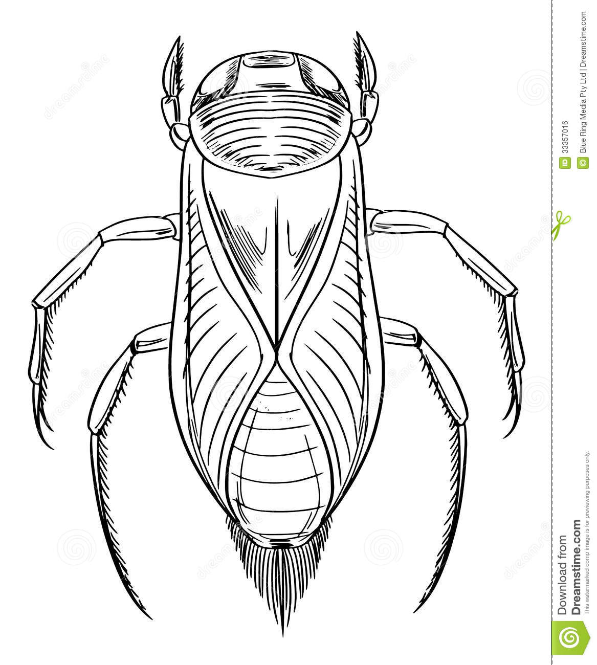 Water Beetle Outline Stock Illustration Illustration Of