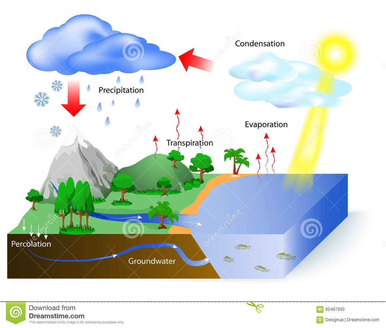 hight resolution of water cycle diagram the sun which drives the water cycle heats water in oceans and seas water evaporates as water vapor into the air labeled