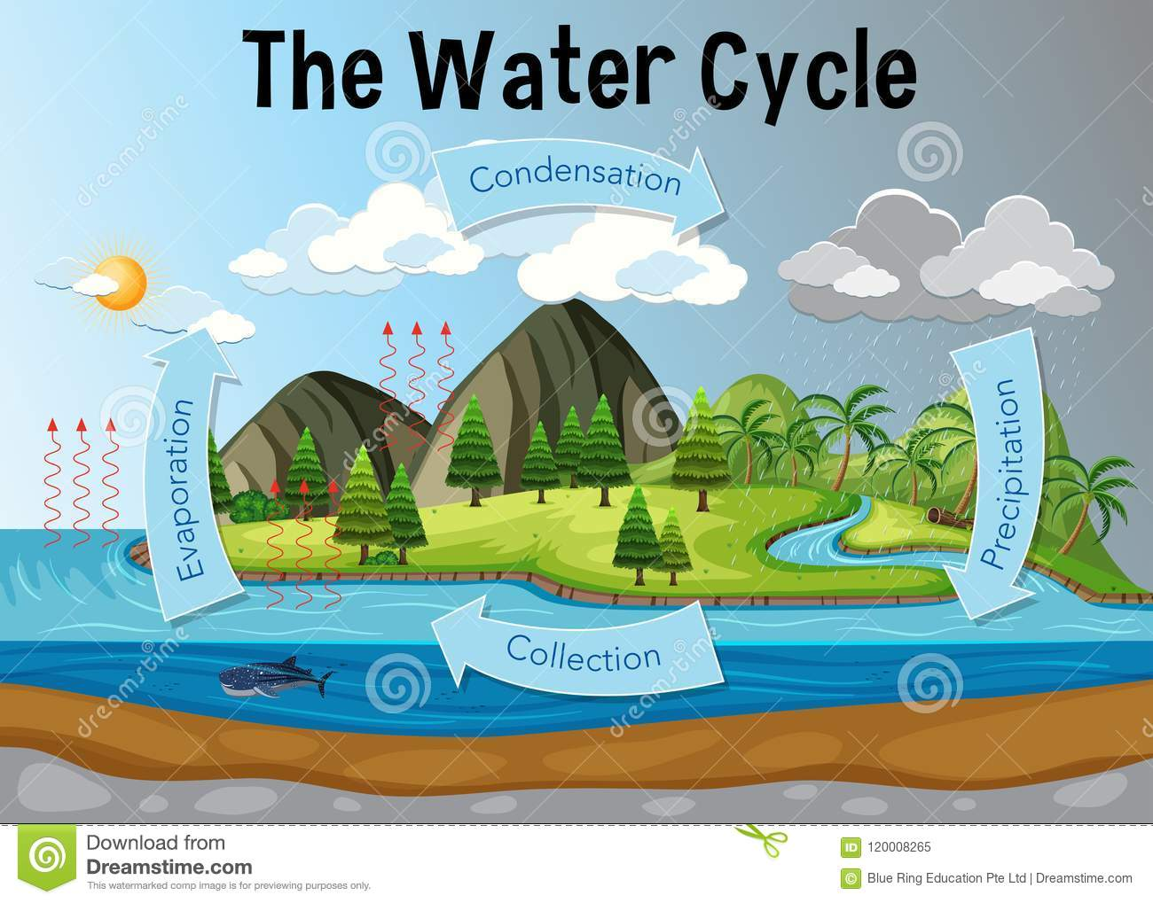 hight resolution of the water cycle diagram