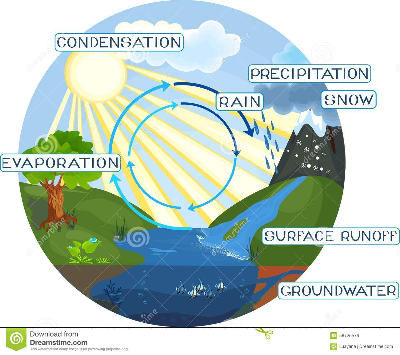 The Water Cycle Stock Vector Illustration Of Evaporation