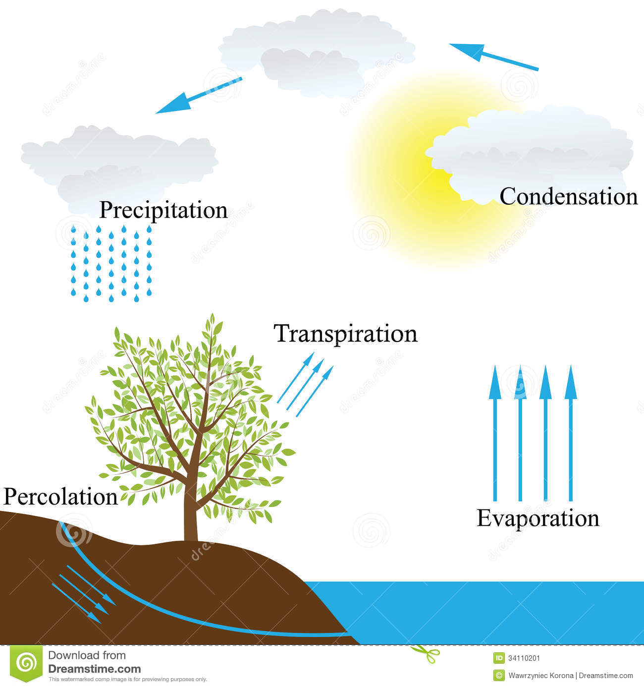 hight resolution of vector schematic representation of the water cycle in nature
