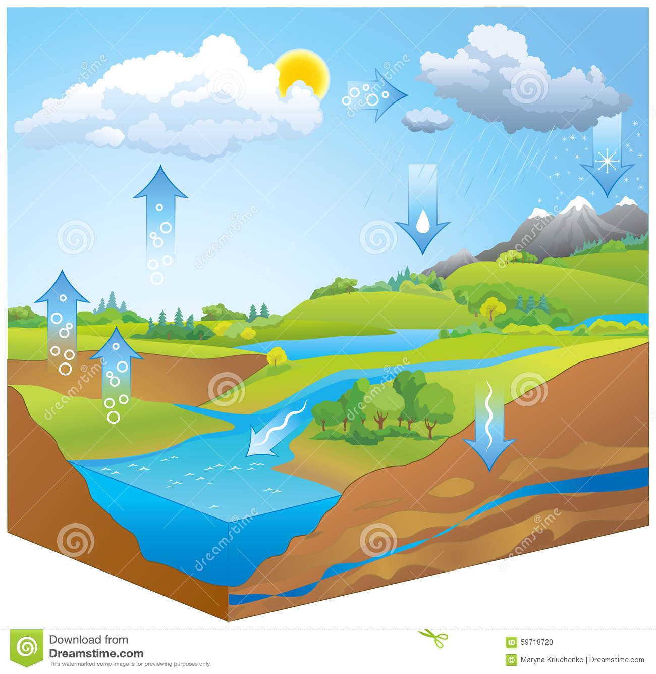 Water Cycle Vector Diagram Stock Vector